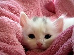Cute fluffy kitten wrapped in a towel