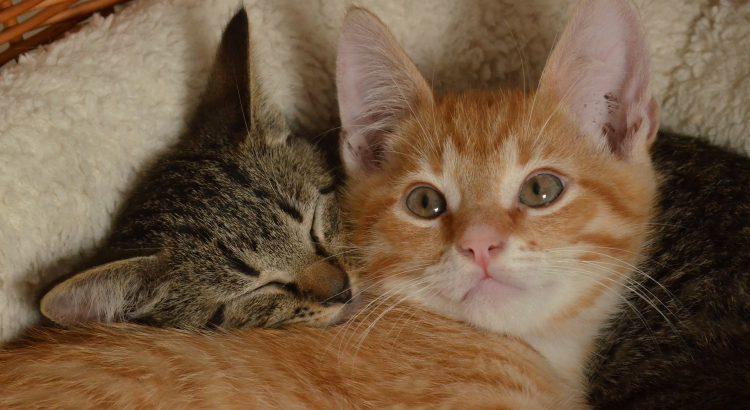 Kittens (PD)