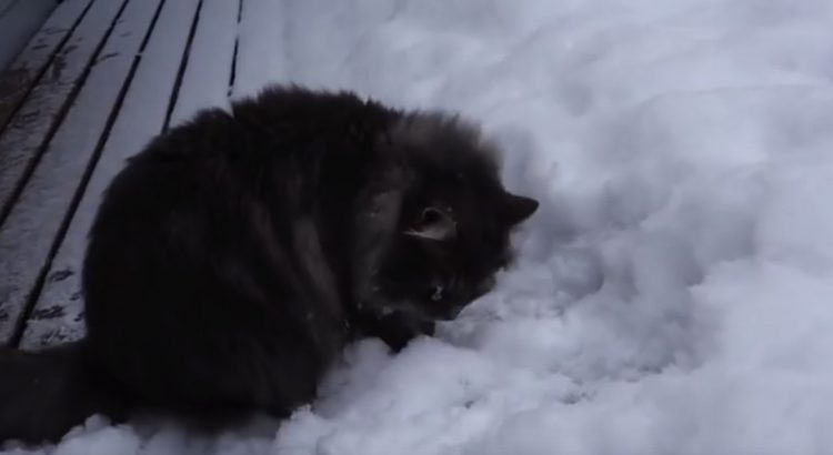 Cat likes the snow