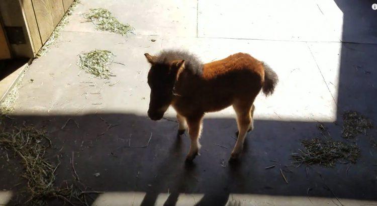 Cute Little Horse