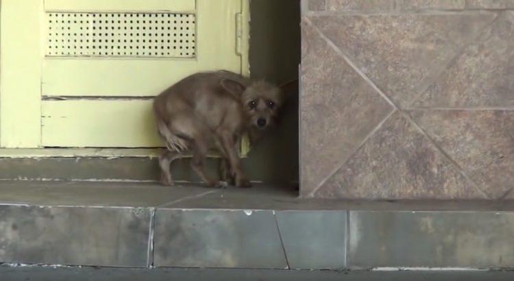 Rescue Dog Transformed