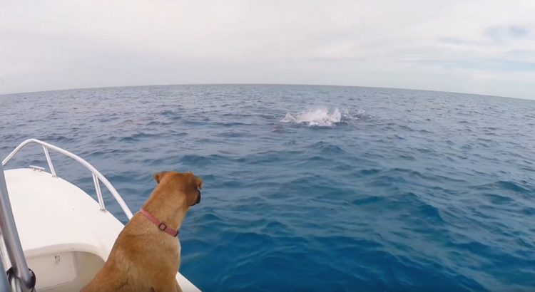 Dog and Dolphins