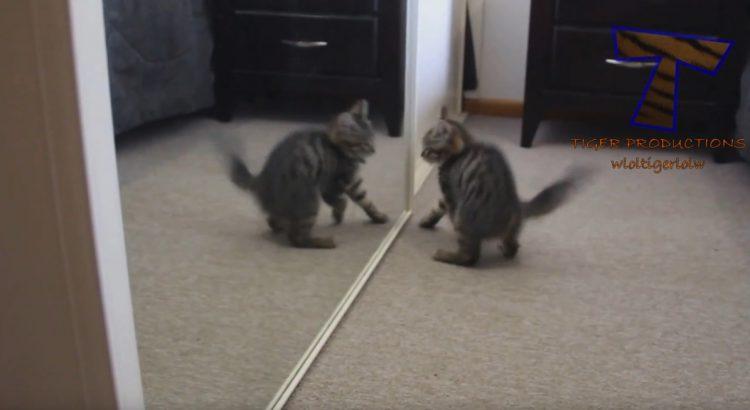 Kittens do Funny Things