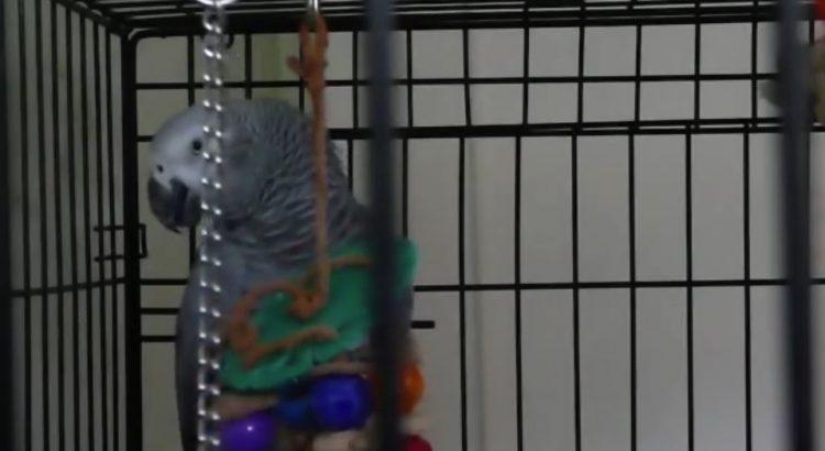Talkative Parrot