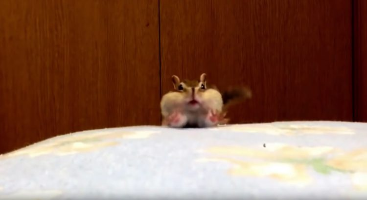 Squirrel Just Loves fresh Sheets